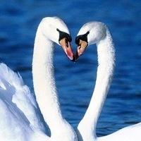 Семья♥Любовь♥Верность