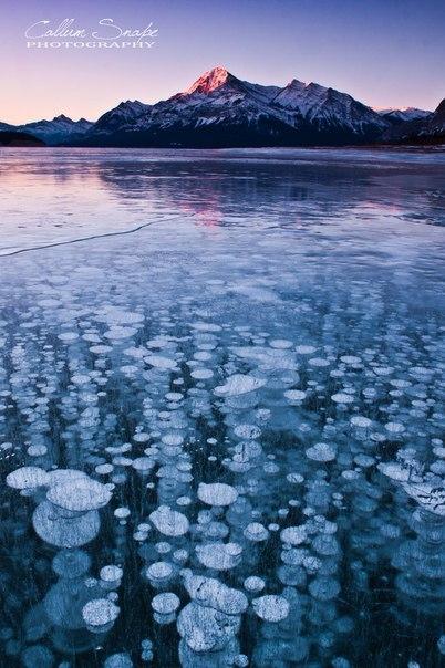 Abraham lake il lago con le bolle di ghiaccio pronte ad for Cabine di pesca nel ghiaccio alberta