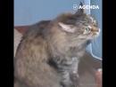 Кошка спасла ребенка от гибели