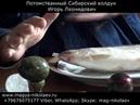 Приворот черное венчание на рыбу. Армения. Ереван. Սեւ մոգություն ։