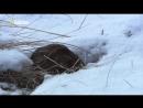 National Geographic Восхождение чёрного волка