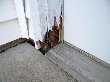 Спасаем деревянный дом от разрушения насекомыми