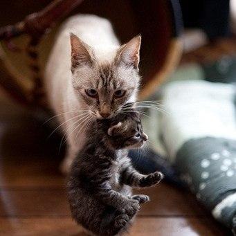 Держит кота за шкирку