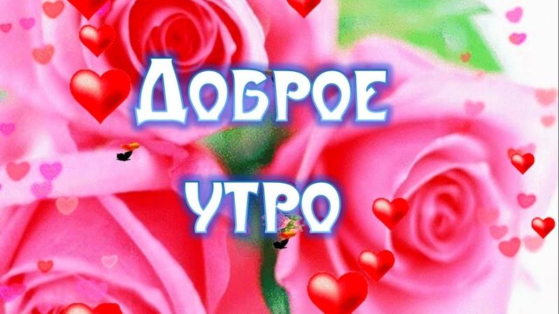 Красивое Пожелание С Добрым Утром Любимой Видео Открытка с Добрым Утром Любимой