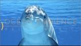 Спокойная Музыка Для Снятия Стресса - RELAXING PIANO - Music - Шум Океана Stress Relief Music