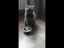 покормите котейкина