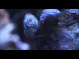 Видео снято на камеру Canon 1DC 4K: 500 millions year old