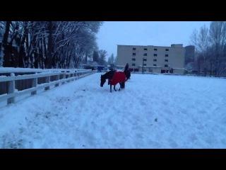 без седла и без уздечки) много снега