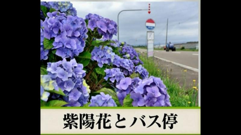 2018-06-21 俳句 - 紫陽花とバス停