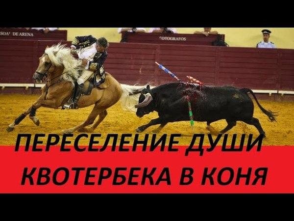 КОНЬ - МЕРЛИН ЛЕГЕНДА КОРРИДЫ Шоу. Конь. Бык. Коррида.