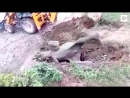 Officials-Rescue-Elephant-Calf-From-Dry-Pit