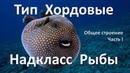 12 1 Рыбы часть I 7 класс биология подготовка к ЕГЭ и ОГЭ 2018