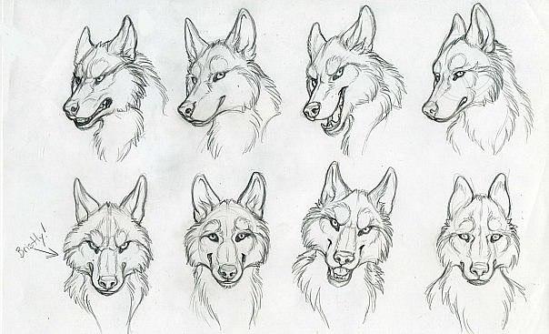 Морда волка рисуем поэтапно