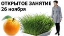 Открытое занятие Адекватное питание 2018 Замалеева Гания Александровна