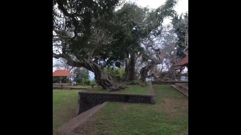 Pura Madya