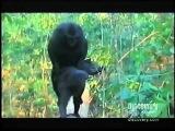 Спаривание обезьян!!!