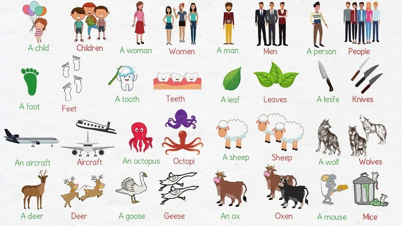 Learn Common Irregular Plural Nouns in English | Irregular Plurals List