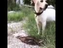 ...ох,какая я умница разумница...такую собачку обманула...