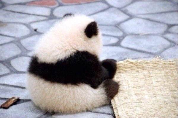 — Говорят, что когда панды грустят, они просто сидят в одиночестве.
