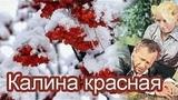 КАЛИНА КРАСНАЯ (драма_СССР_1973)