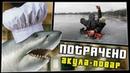Акула-повар ПОТРАЧЕНО