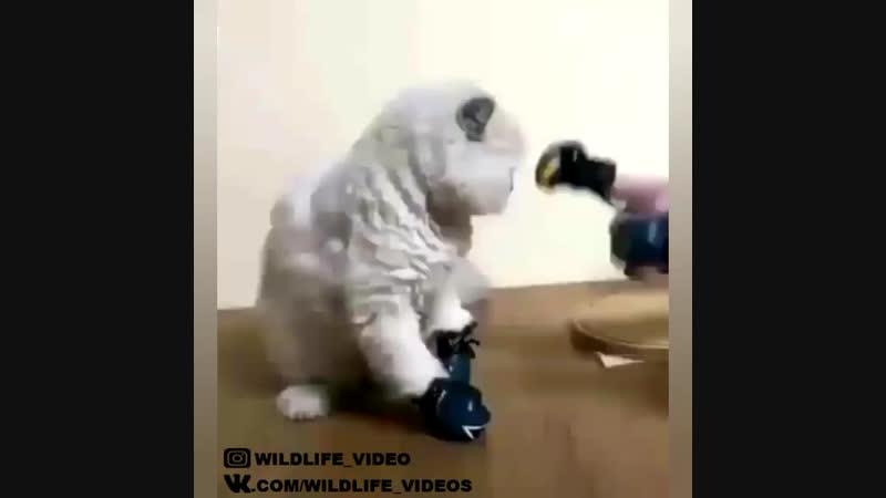 Боевой кот 😂