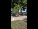33 водопада (крона тюльпанового дерева)