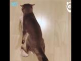Котик всегда носит с собой любимую игрушку