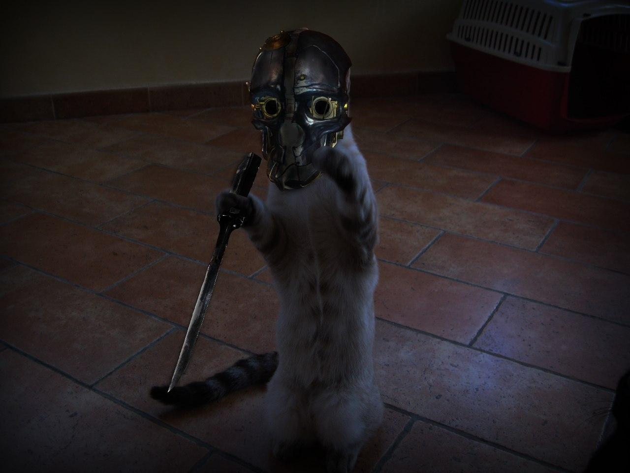 Чумной кот