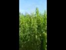 Video 7a34e330c49d6046e7badd3a0a1f8b73
