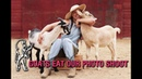 The «Jean»: Browsey Acres: Ronda Rousey's Goats Try to Eat the Photo Shoot