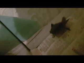 мыш летучий кродеться