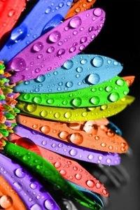 кольорове фото