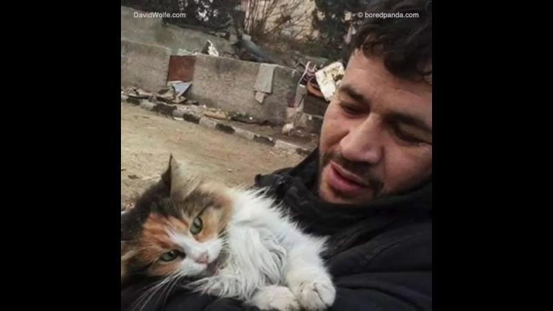 Герой Сирии - Il Gattaro D'Aleppo