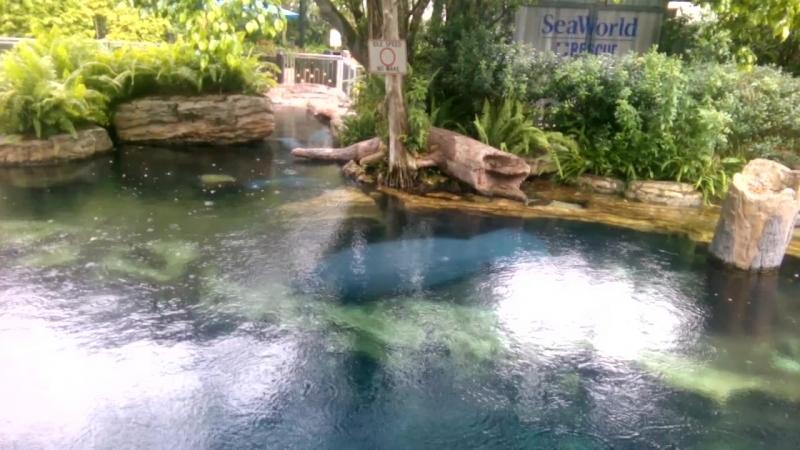 Парк Seaworld, ламантины_1