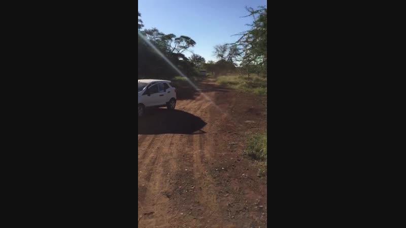 Носороги промахнулись Но шанс был Свазиленд май'18
