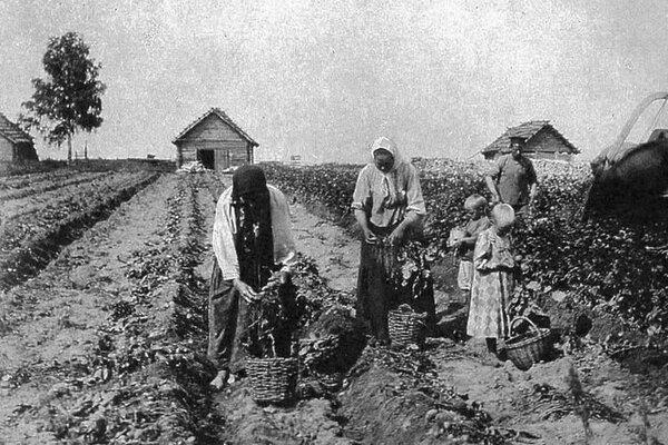 Какие овощи растили русские до появления картофеля Лекарство, что стоит тысячу монет, растет у самого плетня. Есть такая не очень известная, к сожалению, русская пословица. Текст ниже отчасти