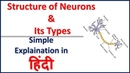 Structure of Neurons and Its Types Simple explaination in Hindi Bhushan Science