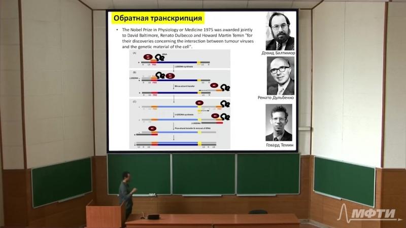 10. Транскрипция у эукариот. Обратная транскрипция. Трансляция