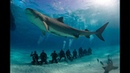 Nat Geo Wild Ужас тигровой акулы 1080р