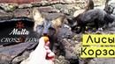 Жадная абрикосовая ЛИСА и чёрный диетический ЛИС 🦊 ZOO VLOG 🐾