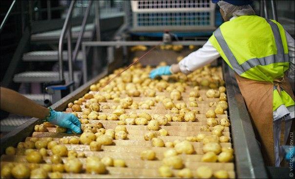 Производство картофельных чипсов  Отличная идея для бизнеса – произв
