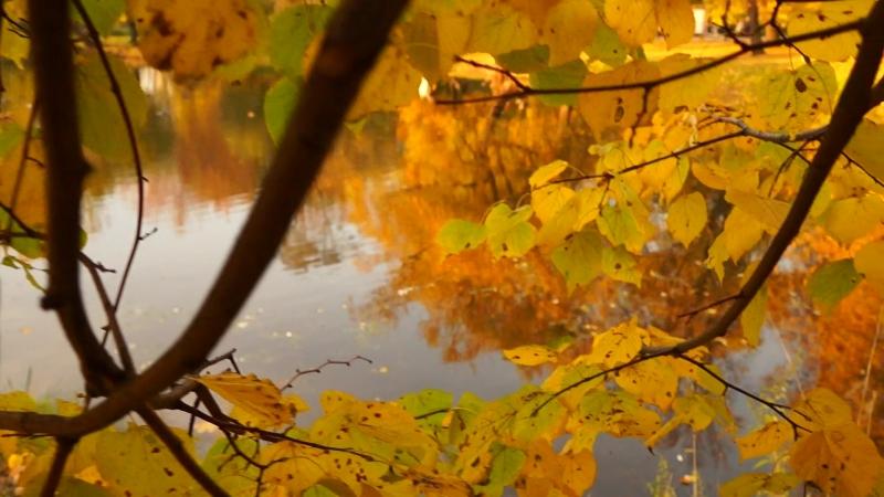 Золото осени московских парков... Четырнадцатый день октября...