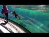 Удивительная реакция морского льва на падение маленькой девочки
