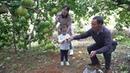 这果子很多人喜欢吃,挂果太多树枝全被压弯,产量高达近千斤