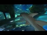 Знакомство с Океанариумом: главный аквариум