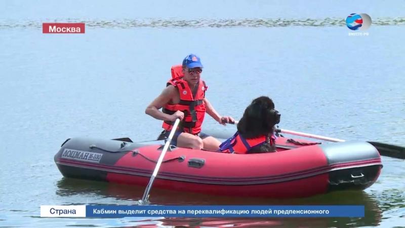 РЕПОРТАЖ_ Собаки-спасатели дежурят на московских пляжах.mp4