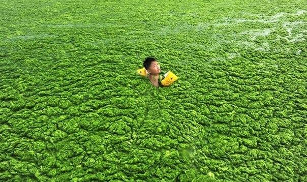 Зеленое море