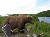 Incredible Up-Close Encounter With Alaskan Brown Bear