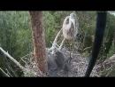 Гнездо Серой цапли 31 Завтрак